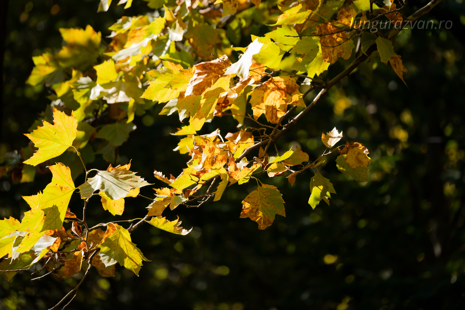 Dying Fauna: The Color Of Yellow. Yellow and brown leaves denoting dying fauna in the autmn season.