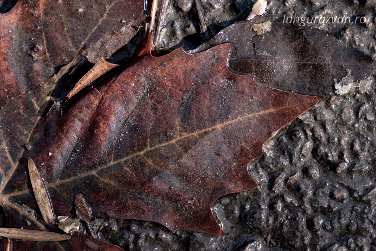 Wet leaf with leather like color and texture