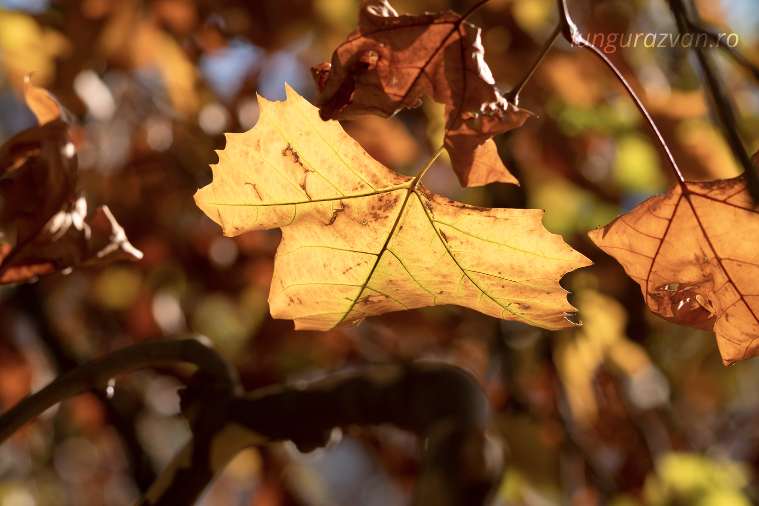 Bits of Yellow, More Brown. Autumn leaves with a rich brown color.