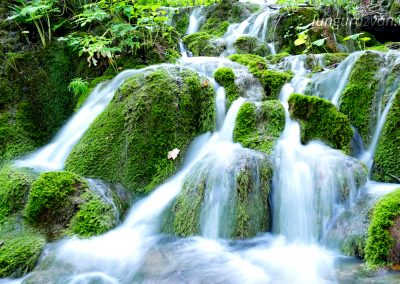 Flowing Over Luscious Green