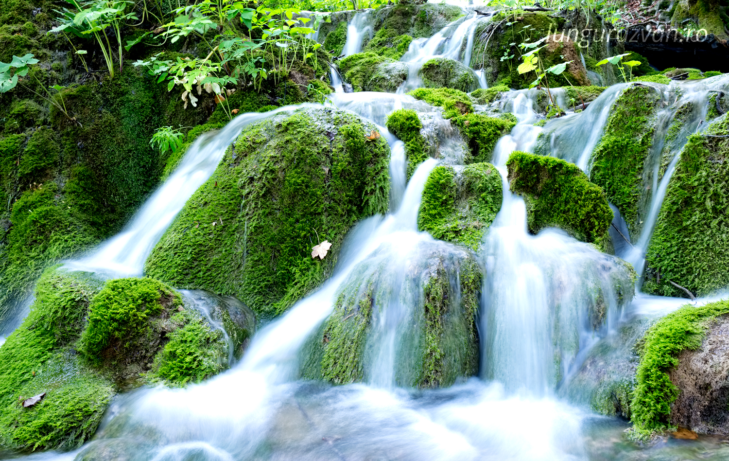 Flowing Over Luscious Green, soft waterfall over rich green terrain